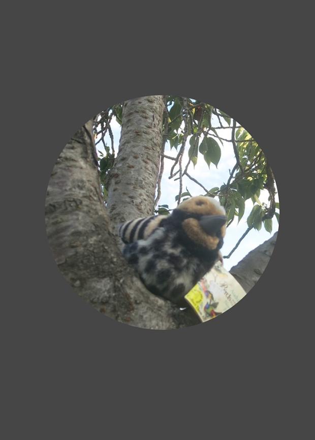 2018_08_Audubon_3323_1000_focused